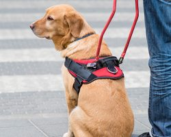 Sit, Stay, Work: Service Animals In The Workplace