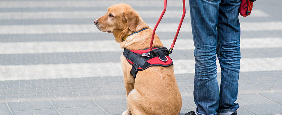 Are employers required to allow service animals in the workplace?