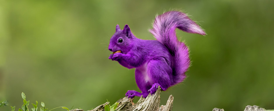 Relaxing Job Requirements to find the purple squirrel